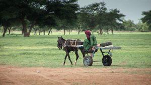 Zielona Afryka - afrykański rolnik