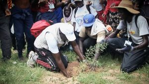 Sadzenie drzew w Afryce przez miejscową ludność