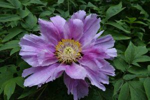 kwiat z Ogrodu Dendrologicznego w Przelewicach