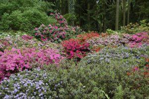 kwiaty w Ogrodzie Dendrologicznym w Przelewicach